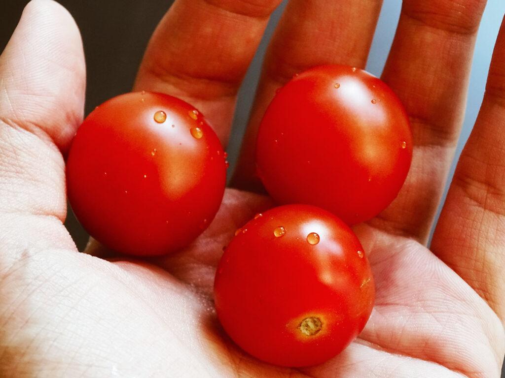 Frøsø køkken inspiration tomater